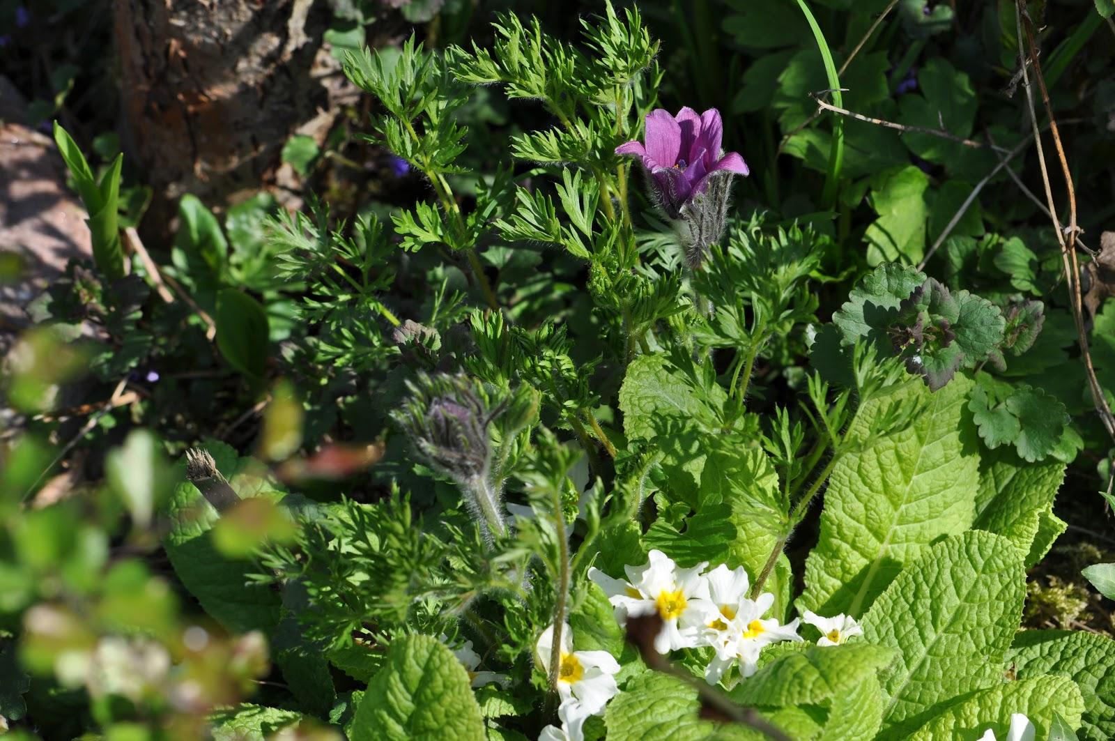 Jardin de la sauvagine protection des rocailles fleurs for Au jardin des fleurs