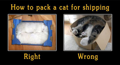 Shipping a Cat