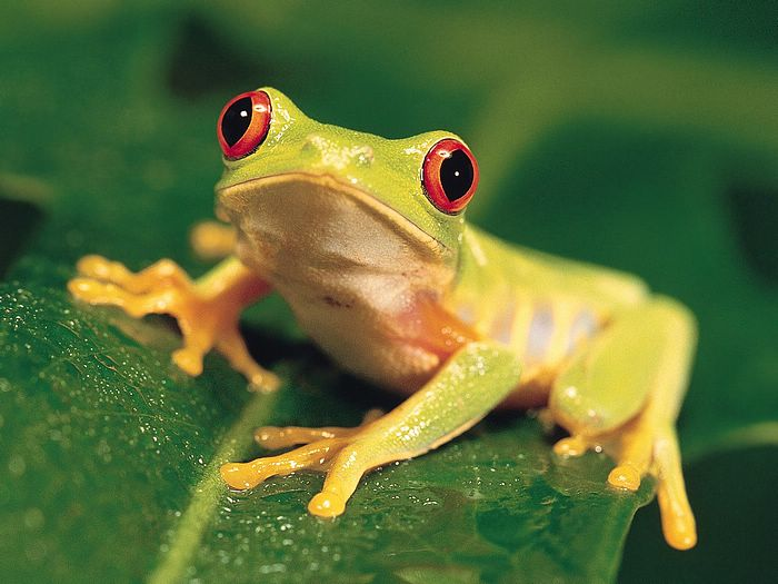 Most 10 Beautiful Animals Latest HD Wallpaper