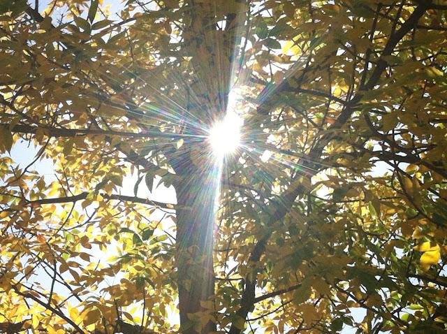 Goodbye Osprey, Hello Fall!