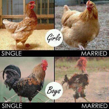 Chicken/Girls Vs Rooster/Boys