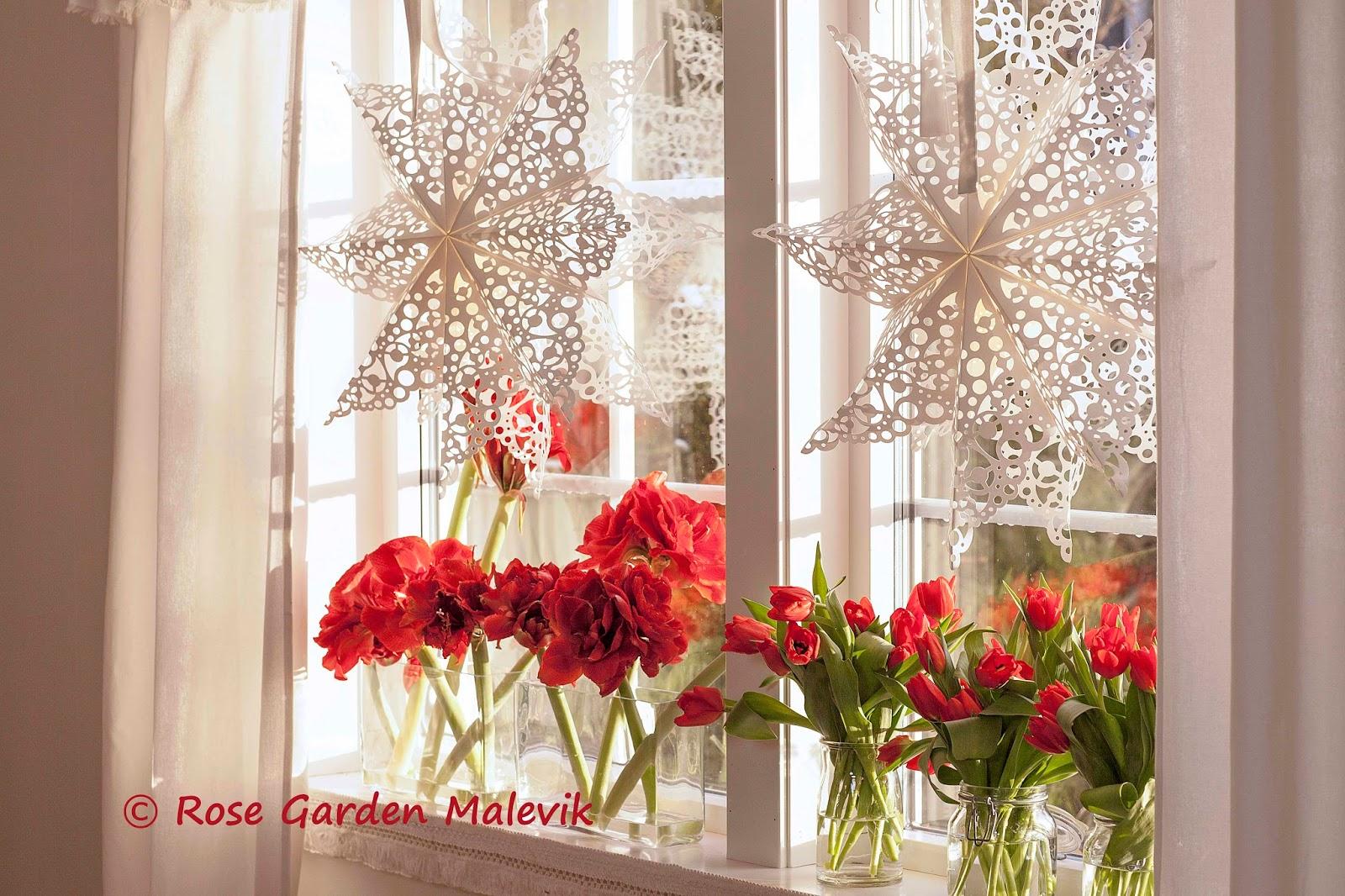 Rose garden malevik: det magiska ljuset ~ the magic light