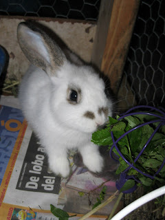 rabbit veggie basket