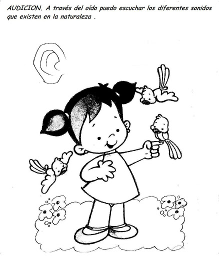 Los cinco sentidos del cuerpo humano para niños - Imagui