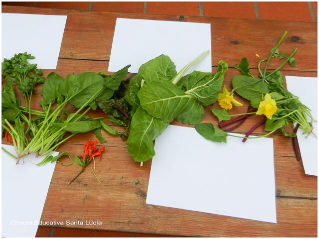 Hojas y flores prontas para la experimentación - Chacra Educativa Santa Lucía