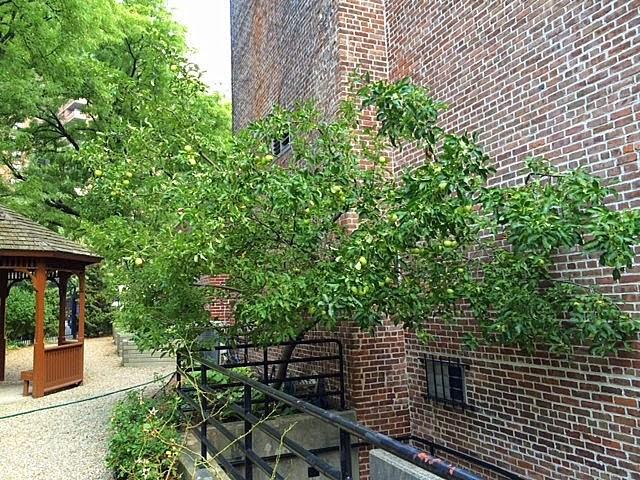 A Cake Bakes in Brooklyn: Henry Street Garden French Apple Pie