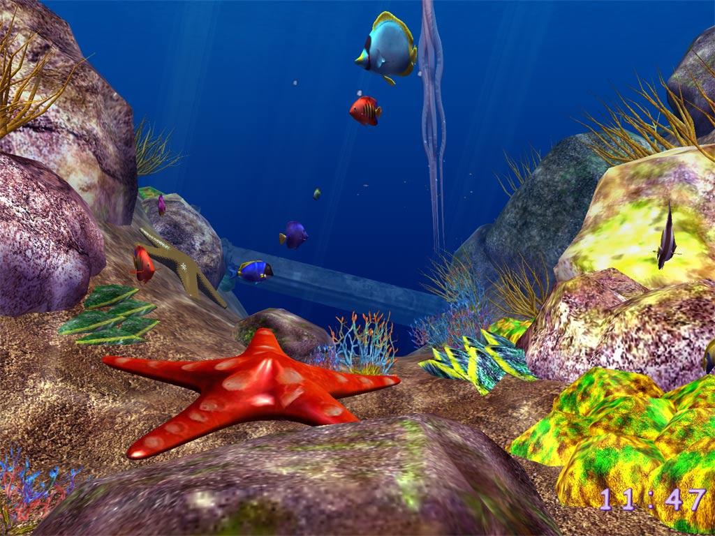 ocean fish picture