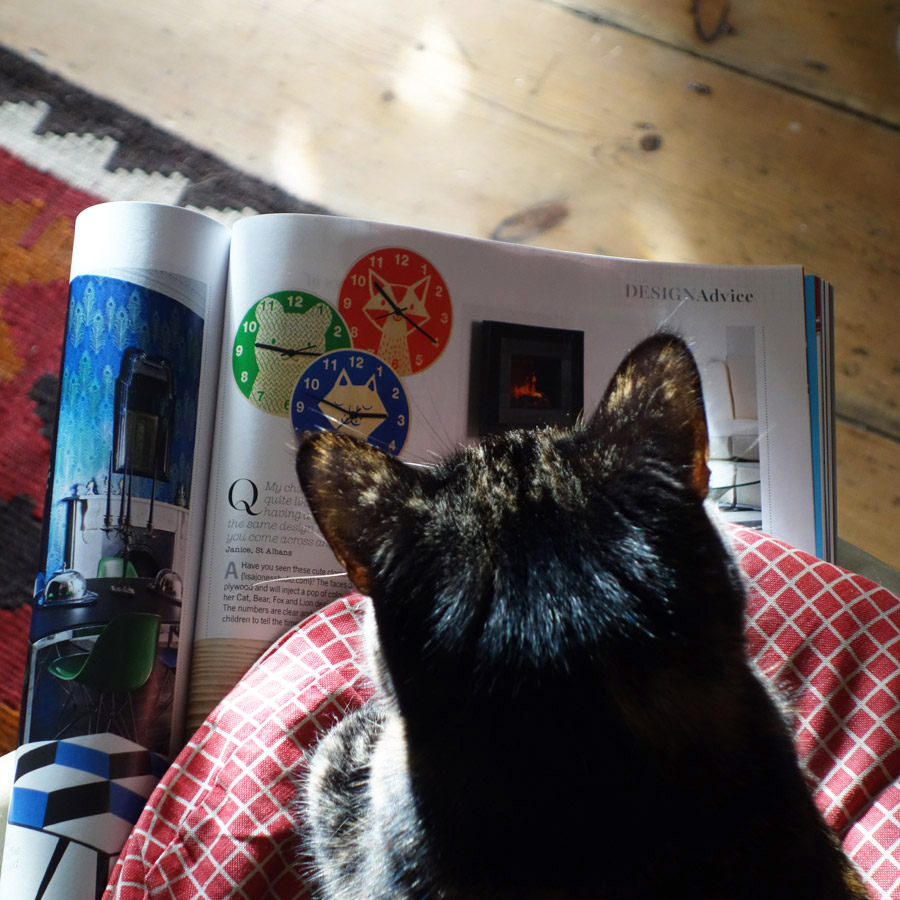 Cat phoographed as though reading magazine