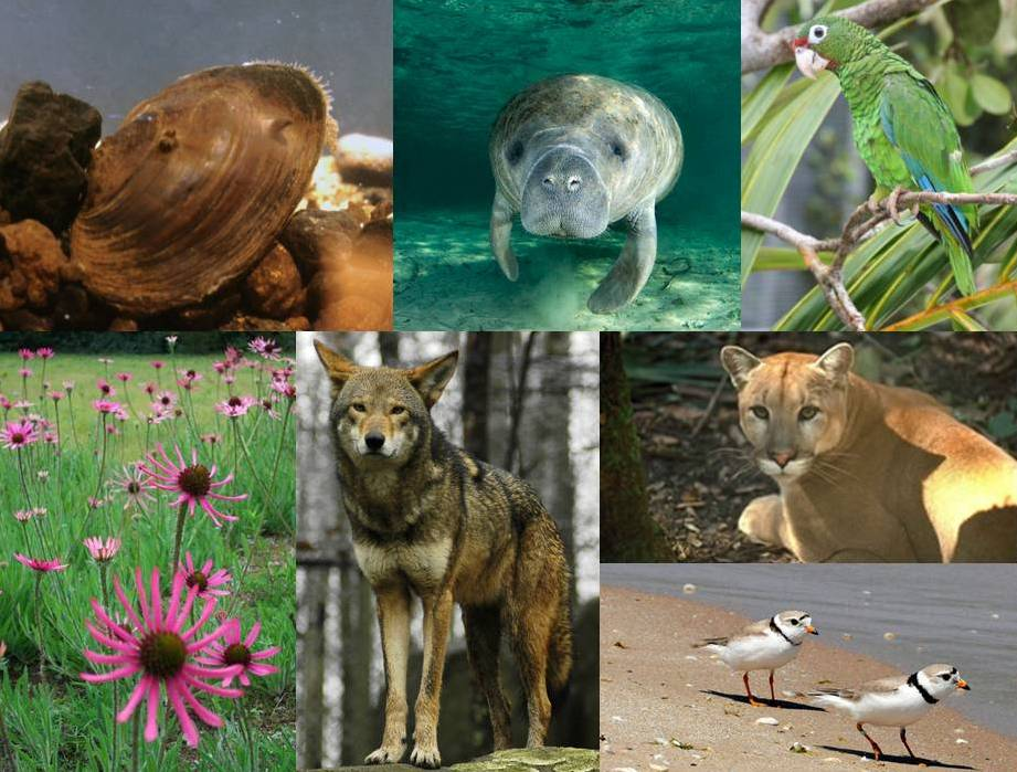 endangered animals india Read about the endangered animals in india find out about national parks of india, gir national park information, ranthambore national park, etc.