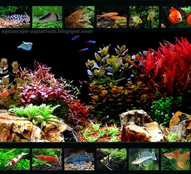 Freshwater Aquarium Fish for Aquascape