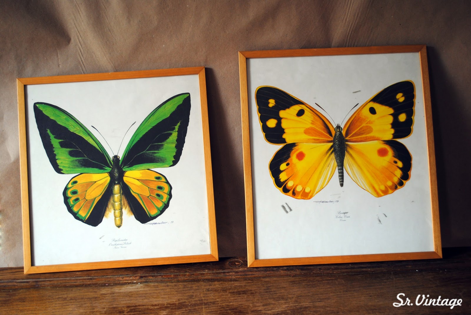 Lujoso Imágenes De La Mariposa Enmarcados Bosquejo - Ideas ...