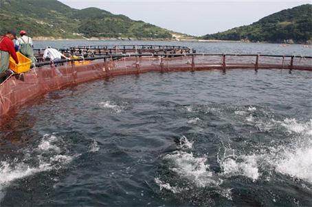 Frutos del mar piscifactor as for Criadero de peces