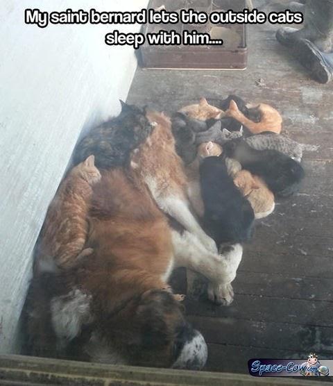 funny pets cats pics