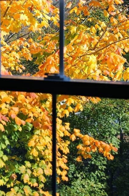 swamp maple foliage