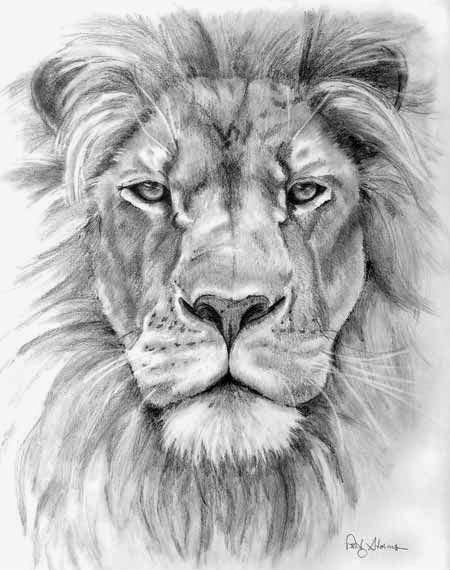 lion-pencil-drawing