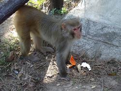Monkey, Monkey, Monkey