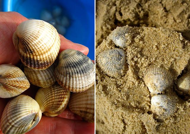sand, shells