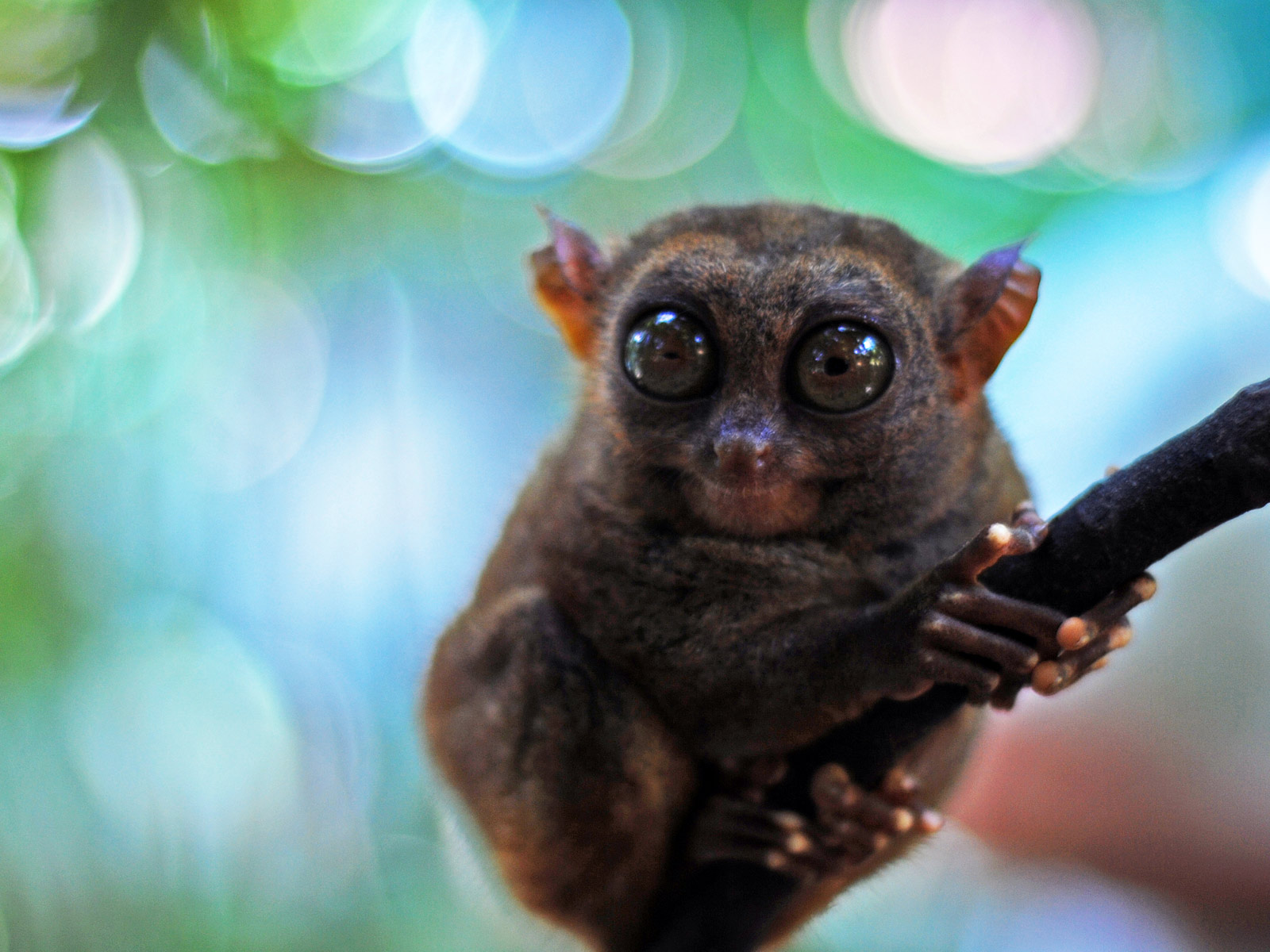 Hd Animals Cute Monkey Wallpaper