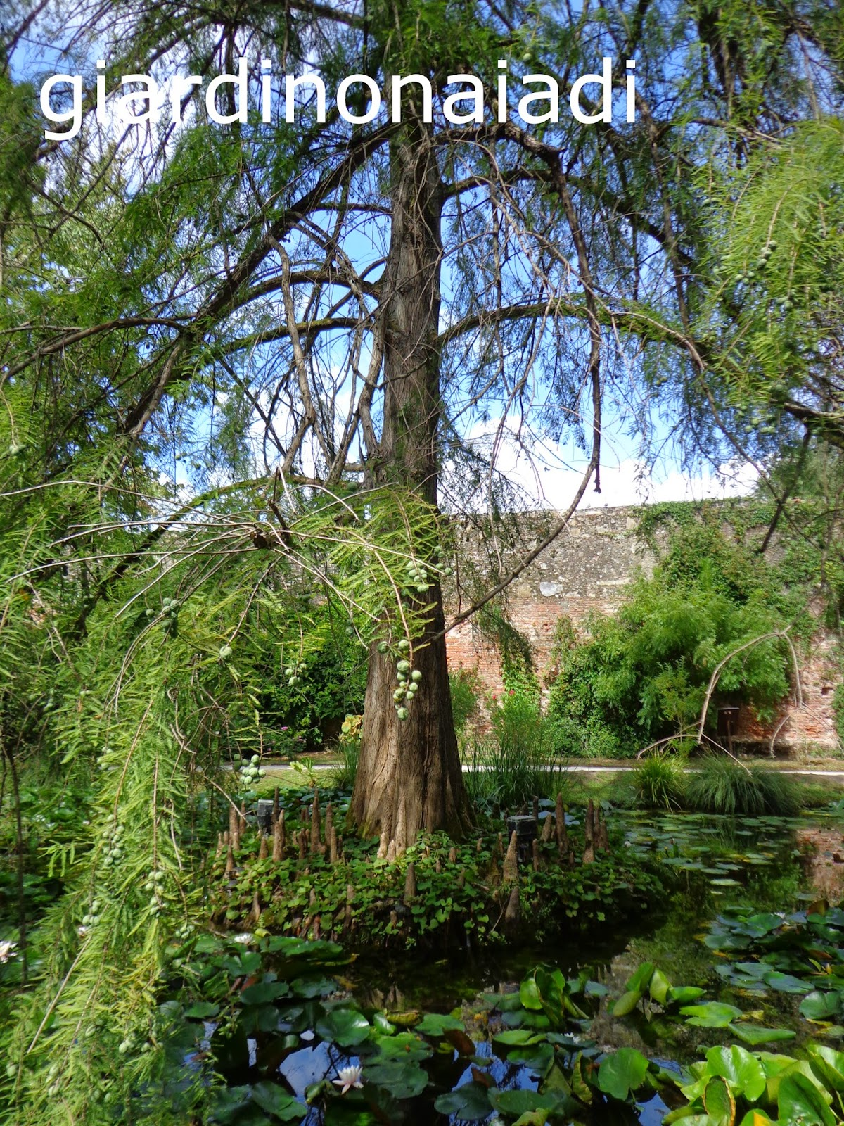 Il giardino delle naiadi un fantasma nel laghetto for La casa nel laghetto