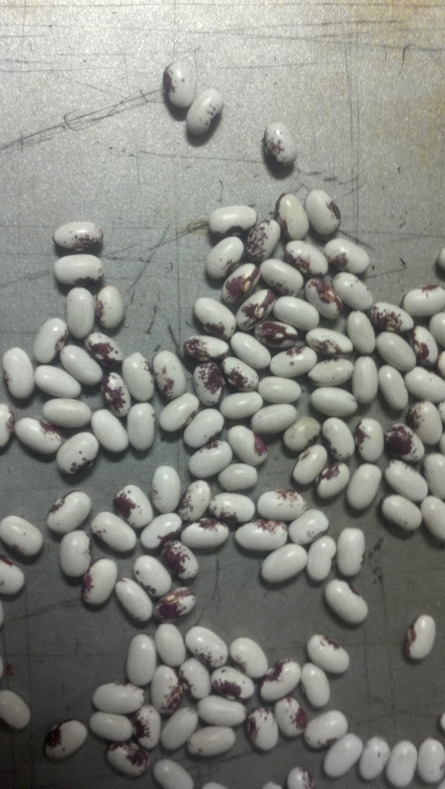 how to grow come dry beans