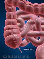 La apendice