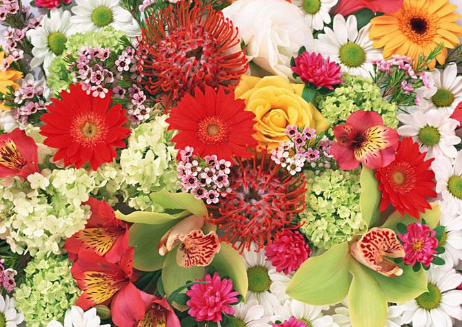 Image result for фото цветы равновесия