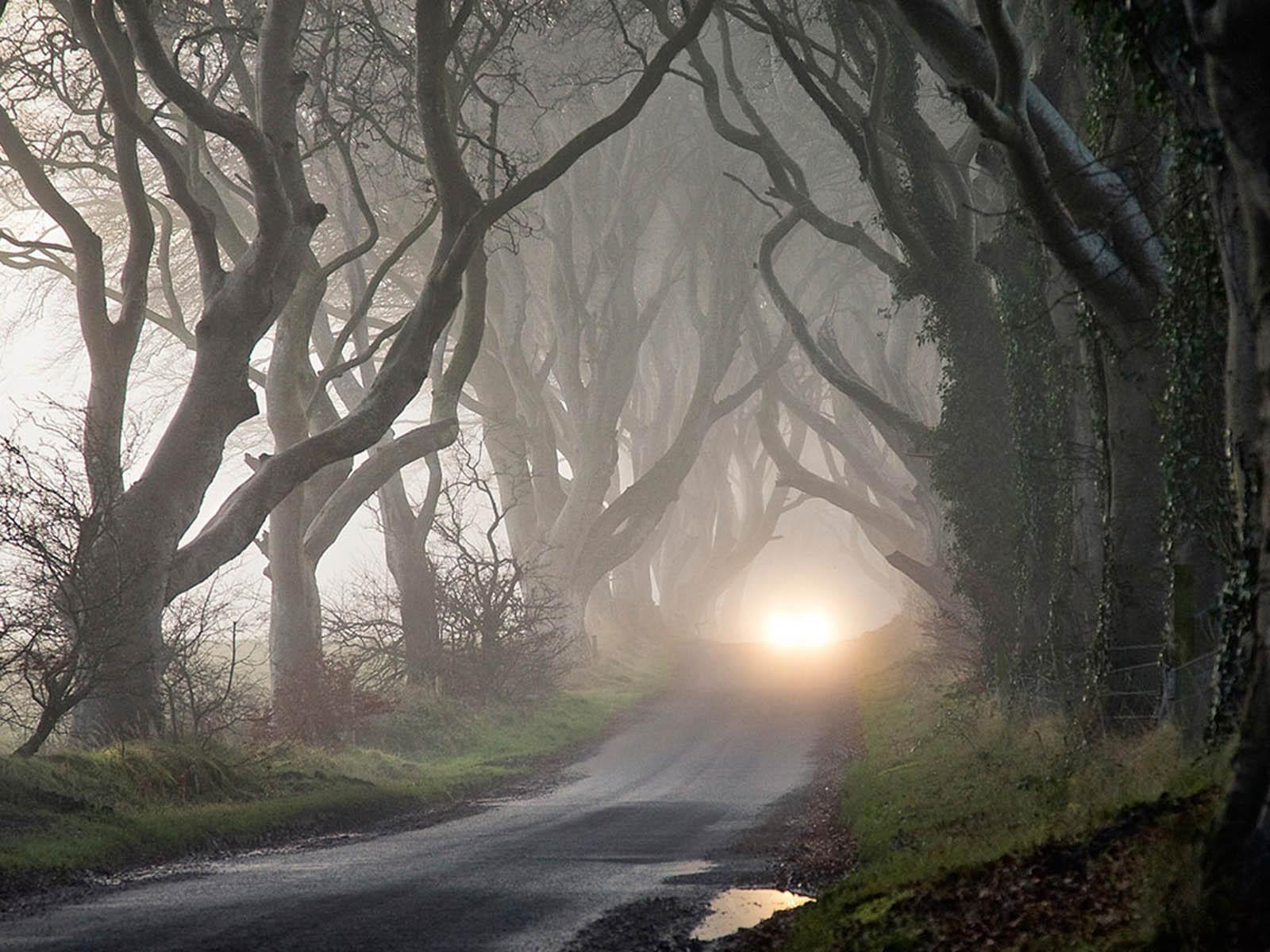 Wallpaper twilight forest - Twilight wallpaper ...