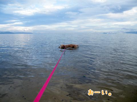 犬の海水浴