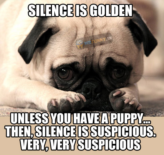cool-puppy-silence-suspicious-picture