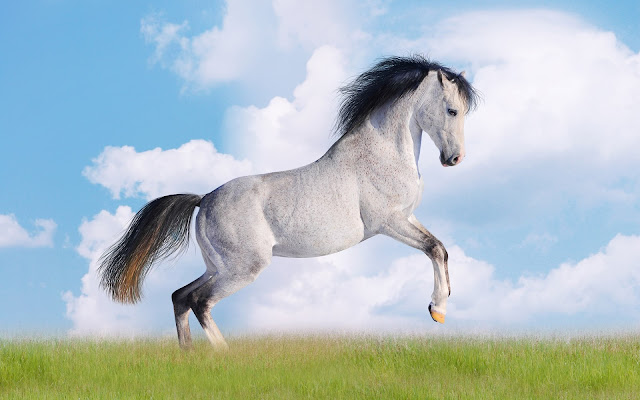 white_horse_wallpaper_hd