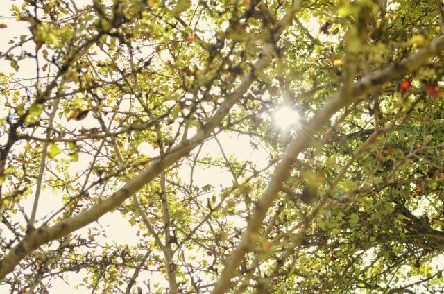 sunny-autumns-day