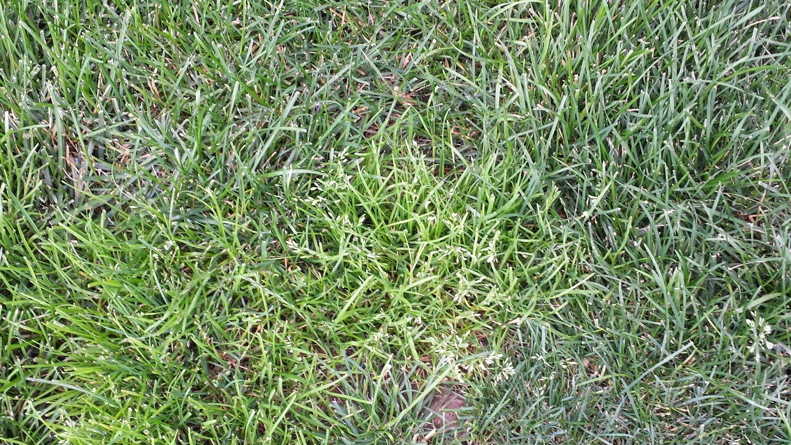Tall Fescue Information and Care Guide  Lawn Care Academy