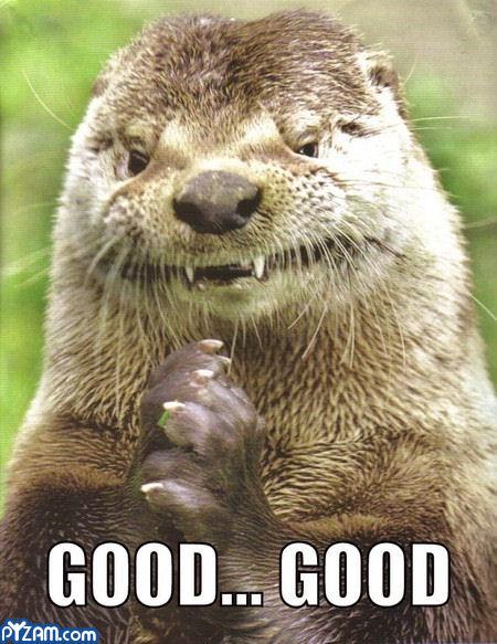 Good Morning Otter Meme : Funny animal