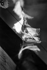 Exposition des photographies de Thierry SCHOENENWALD du 1er février au 4 mars prochain.