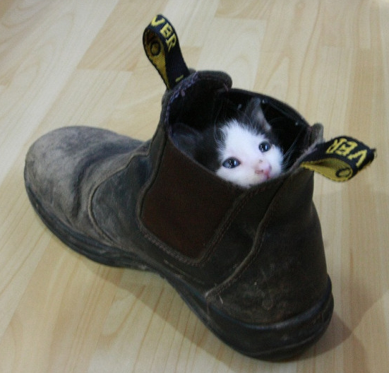 today s quot kitten in a shoe quot photo