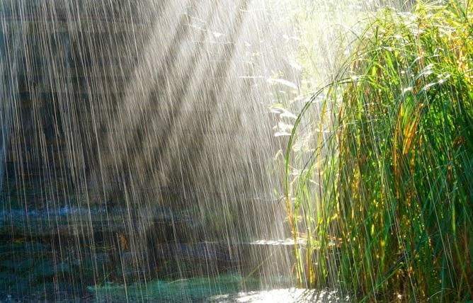 scientific park d 39 o vient l 39 odeur de la pluie. Black Bedroom Furniture Sets. Home Design Ideas