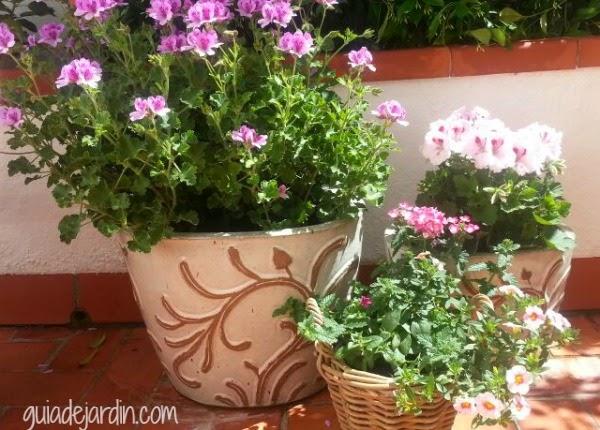 Flores en macetas guia de jardin - Jardines en macetas ...