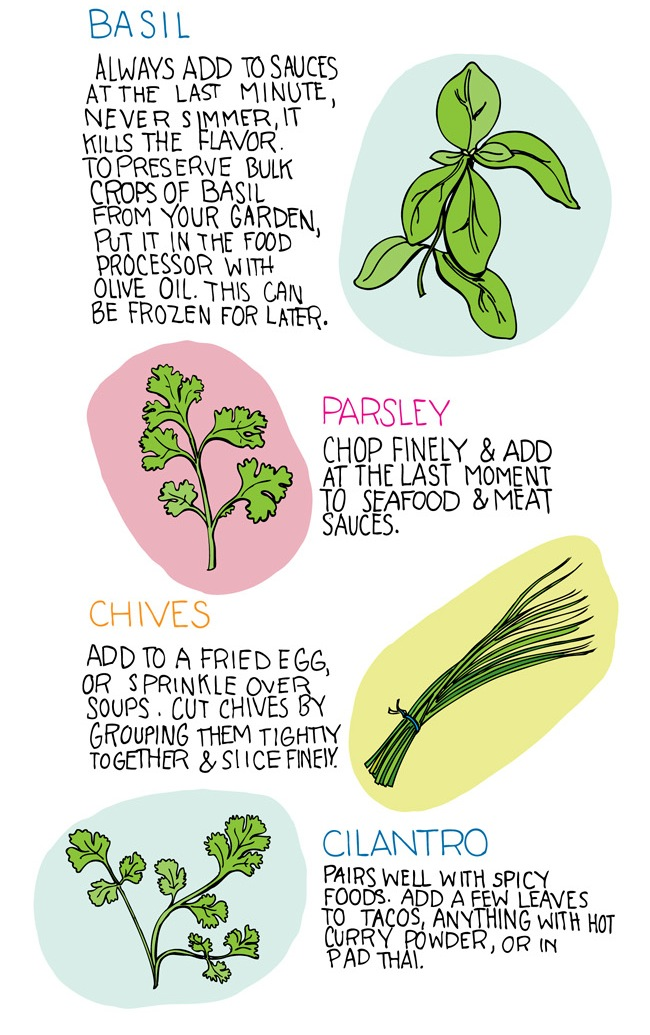 illustrations of basil, parsley, chives, and cilantro