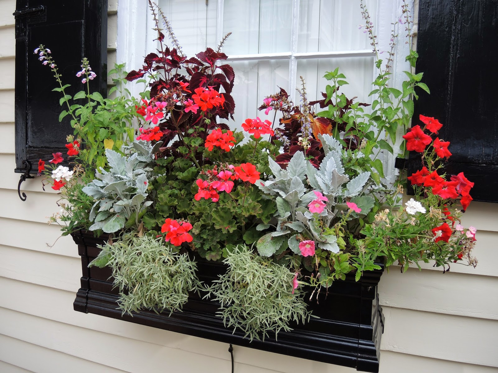 begonias window box flowers charleston sc downtown historic home