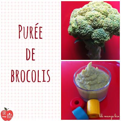 Purée de brocolis : recette bio pour les bébés à partir de 6 mois proposée par BB mange bio