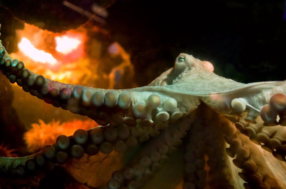 New England Aquarium News And Updates Halloween Countdown
