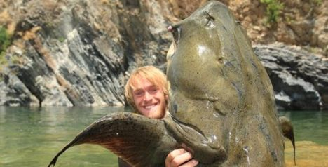 Giant Devil Catfish - ...