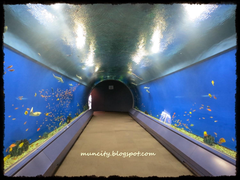 Lalalaland...: Osaka Aquarium Kaiyukan