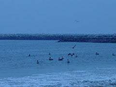 Dockweiler Beach, Playa del Rey
