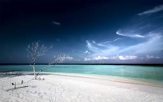 dead tree beach (6)