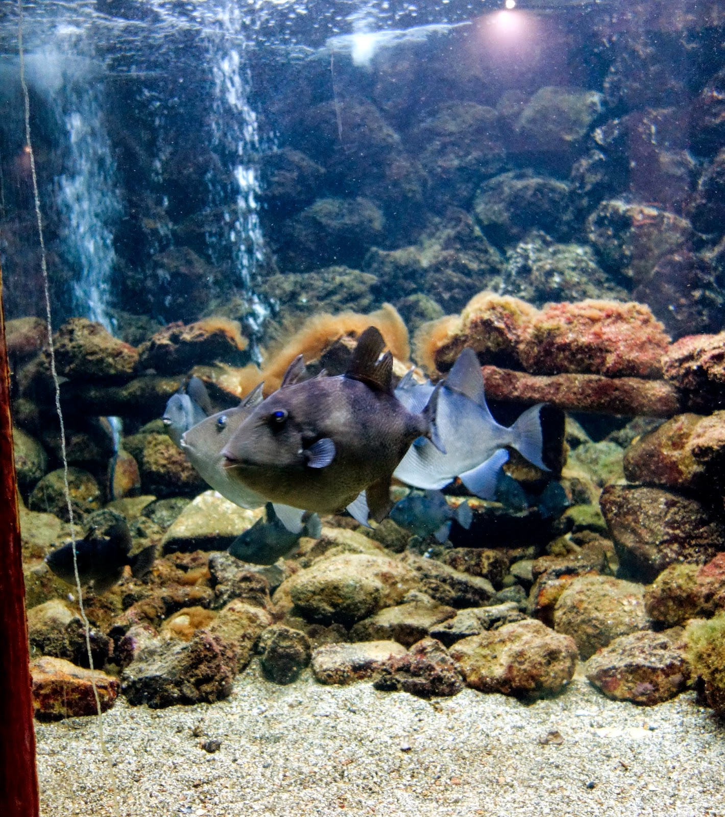 Il Blog Di Ciro Discepolo November In Naples The Aquarium