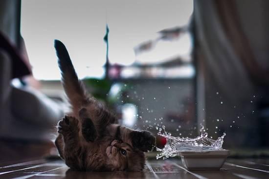 kucing-comel-terjatuh