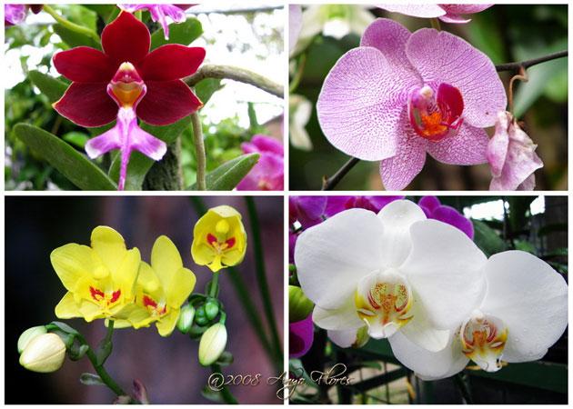 nova flowers macam   macam bunga