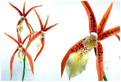 Brassada Orange Orchidee
