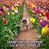 Tι είναι ευτυχία;